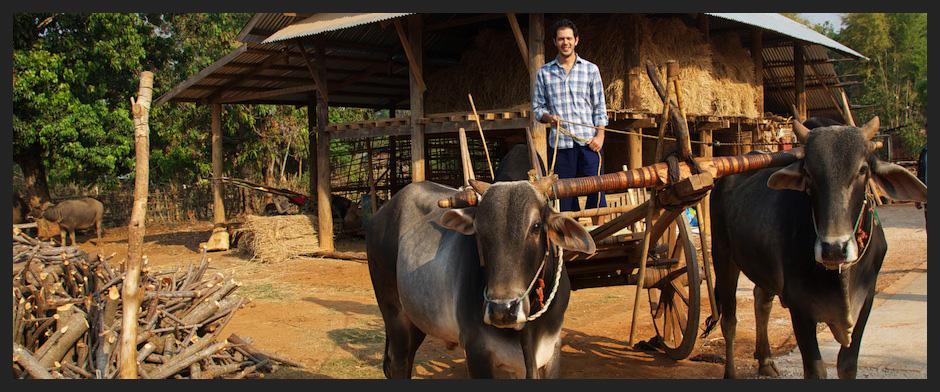 Juan - Bullock cart
